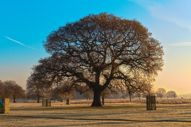 Frosty Morning in Bushy Park 6a