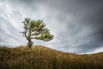 The Spindly Tree on the Grassy Hilltop