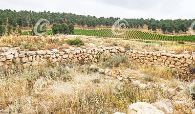 Vinyard near the Ruins of an Ancient Synagogue