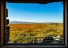 California poppy fields
