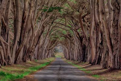 The Spooky Lane