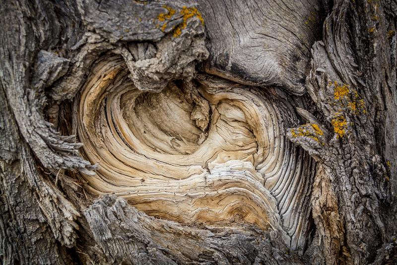 Cottonwood Bark II, Madison River, MT