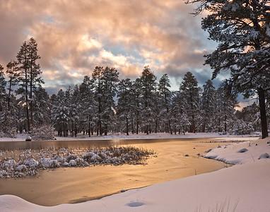 Winter Gold