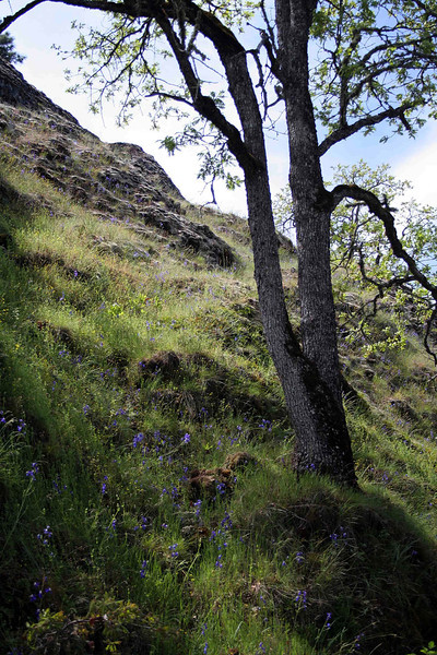 Catherine Creek Hill
