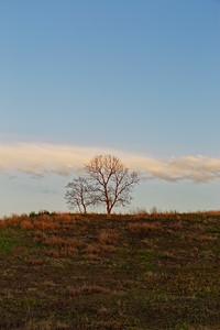 La. Tree & Sky