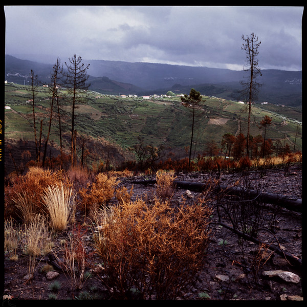 After forest Fire - Douro valley - Portugal