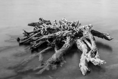 Drift Roots