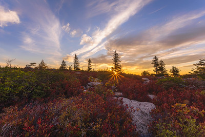 Dolly Sods Sunrise