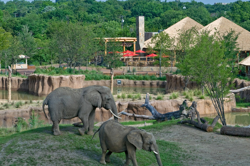 Dallas Zoo, Giants of the Savannah. Client: BRW Architects, Dallas.