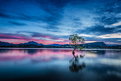 Wanaka Peach Tree
