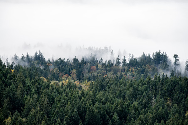 trees-and-fog