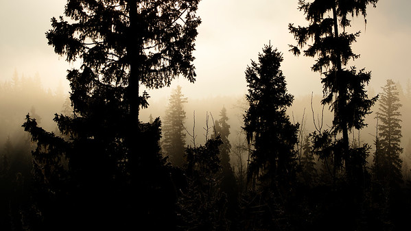 Forest in Contrast