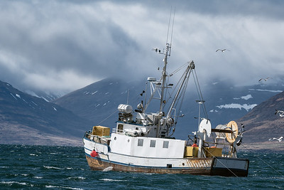 Fishing vessel sails into a storm in the Westfjords in Iceland