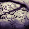 SKELETON TREE | FINE ART LANDSCAPE PRINTS