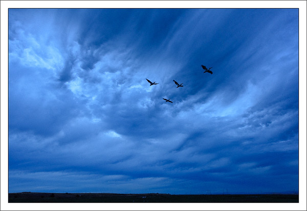 Blue Clouds & White Pelicans After Sunset