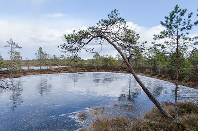 Spring in the Kõnnu Suursoo