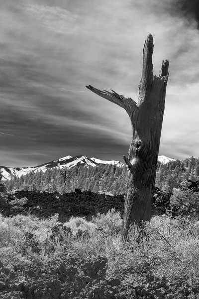 Dead Tree, Sunset Crater Volcano National Park