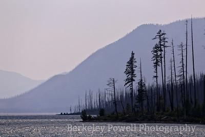 Burned Trees on Lake MacDonald