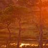sunrise on the marsh landscape