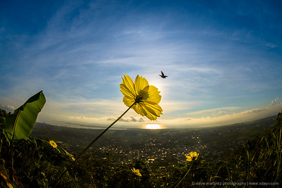 Carmel's Peak