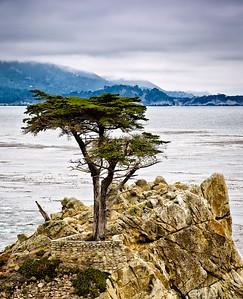 Lone Cypress - Monterey