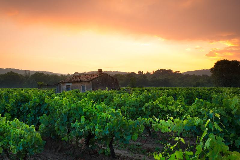 Couche de soleil sur les Vignes