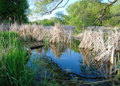 Minnesota Wetland