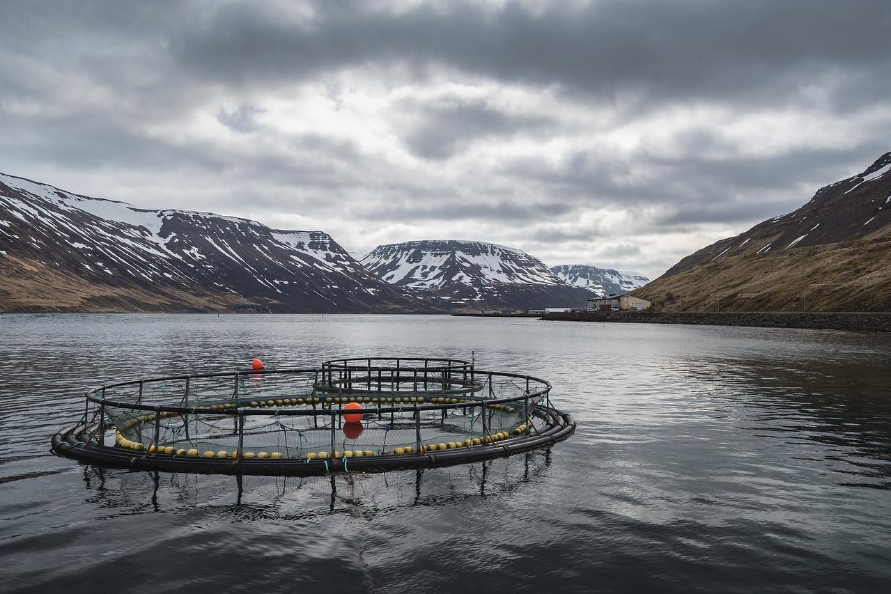 Dramatic clouds over Sudureyri fish farm in Sugandafjordur Westfjords Iceland
