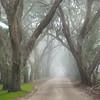 Avenue of Fog.