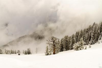 Mt. Naomi Wilderness, Utah.