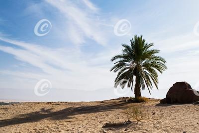 Memorial Palm Tree