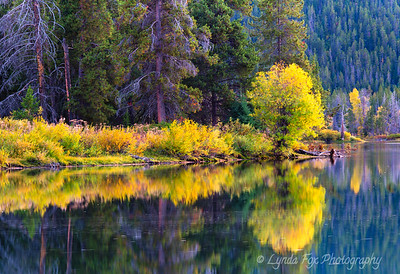 Painted Tree Reflections