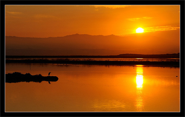 The sun rises over the Diablo Range in the SF East Bay while a great blue heron fishes in Charleston Slough.  Shoreline Park Mountain View, California  30-SEP-2010