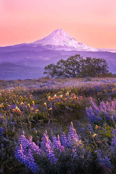 Purple Mountain Majesty