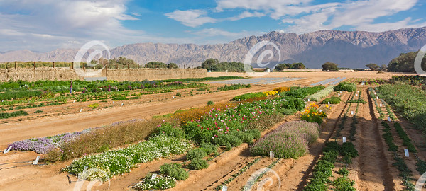 Experimental Farm in Southern Israel