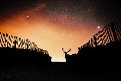 Starry Night Over the Beach