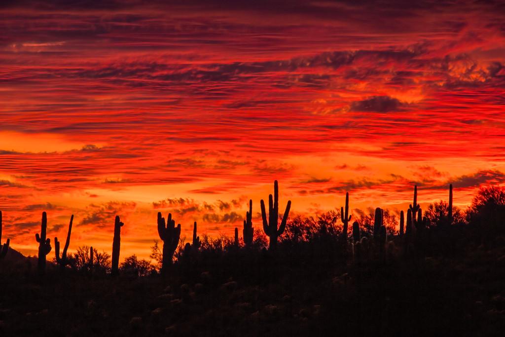 Kindling the Saguaros' Hearth