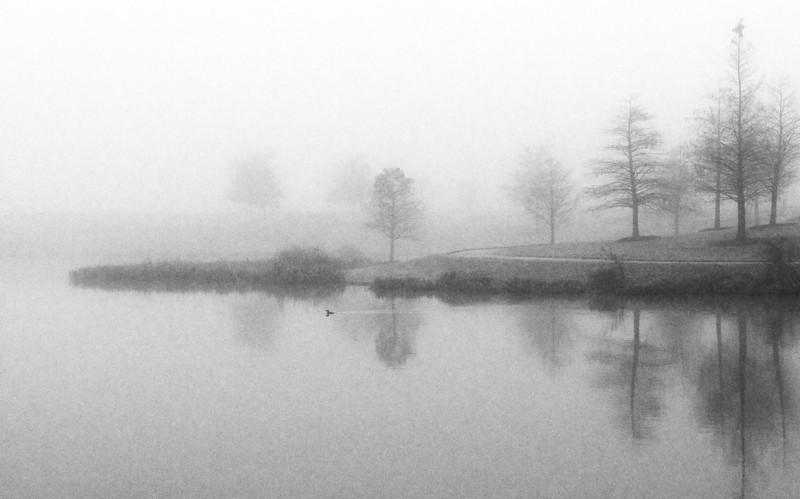 Foggy Lake with Duck Sugar Land TX
