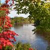 Bright red maple leaves overlooking River Philip, Oxford, Nova Scotia.