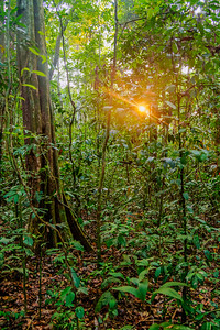 Sunlight in the Jungle
