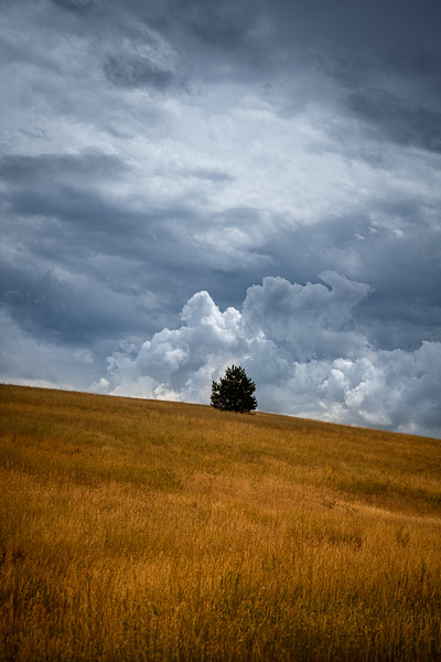montana-tree-on-hill