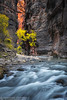 Zion Narrows 3