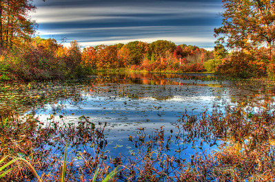 """Falls Delight""  This photo is an illustration of the beauty abound at The Holden Arboretum located in Kirtland, Ohio. The Holden Arboretum is one of the largest Arboretum's in the country encompassing beautiful ponds, creeks, dense woods, lakes, diverse gardens and wonderful hiking"