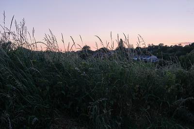 Virginal - Sunset over the tall grass