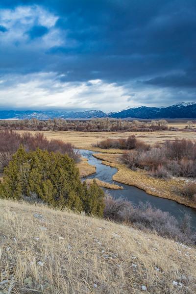 Blaine Spring Creek Portrait, Madison Valley, MT