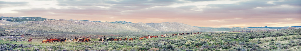 The Great American Horse Drive Limited Edition by Kat Walsh Photography