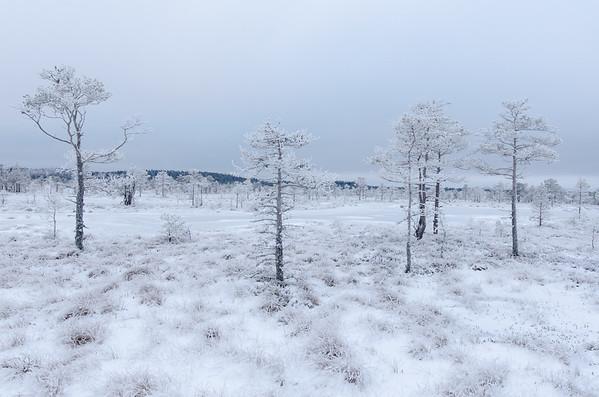 Frosty bog