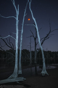 The Blood Moon And Dead Forest