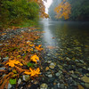 Fall colours at the Koksilah river