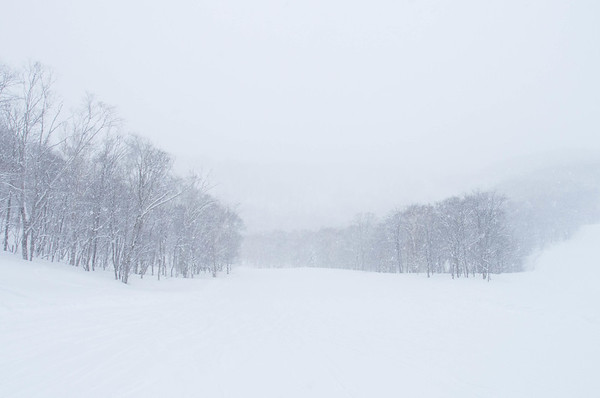Snow forest, Niseko